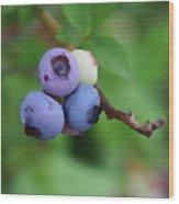 Blueberries On The Vine 3 Wood Print