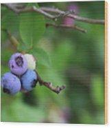 Blueberries On The Vine 4 Wood Print