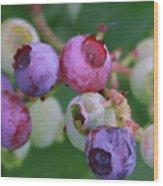 Blueberries On The Vine 5 Wood Print