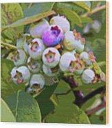 Blueberries On The Vine 7 Wood Print