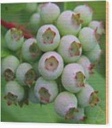 Blueberries On The Vine 9 Wood Print