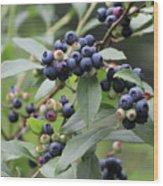 Blueberry Bounty Wood Print