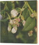 Blueberry Bush Wood Print