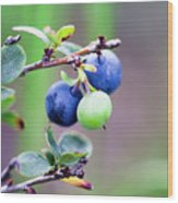 Blueberry Wood Print