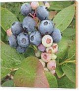 Blueberry Group Wood Print