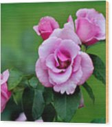 Blueberry Hill Roses Wood Print