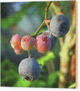Blueberry Morning Wood Print