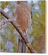 Bluebird 010 Wood Print