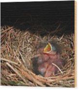 Bluebird Babies Wood Print