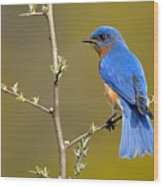 Bluebird Bliss Wood Print