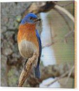 Bluebird Dad Wood Print