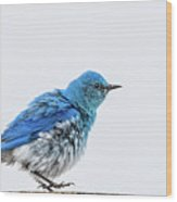 Bluebird Dances A Spring Jig Wood Print