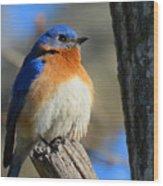Bluebird Evening Wood Print