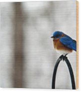 Bluebird Fluffed Wood Print