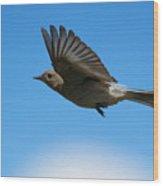 Bluebird Glide Wood Print