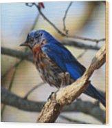 Bluebird In May Wood Print
