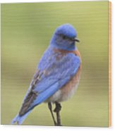 Bluebird Of Happiness Wood Print