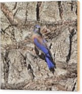 Bluebird On Canary Island Palm II Wood Print