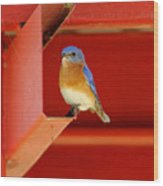 Bluebird On Red Wood Print