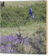 Bluebird Pair In Blickleton Wood Print