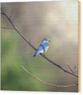 Bluebird Perched On A Tree Branch In The Sunlight Wood Print