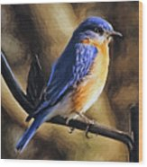 Bluebird Portrait Wood Print