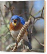 Bluebird Temper Wood Print
