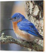Bluebird Vibrance Wood Print