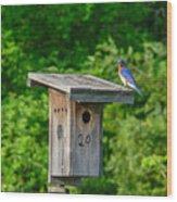 Bluebird With Grub Wood Print