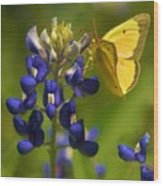Bluebonnet And Butterfly Wood Print