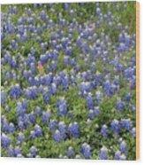 Bluebonnet Beauty Wood Print