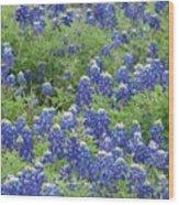 Bluebonnet Bliss Wood Print