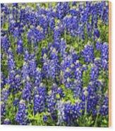 Bluebonnet Blues Wood Print