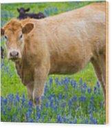 Bluebonnet Cow Wood Print