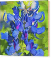 Bluebonnet Fantasy Wood Print