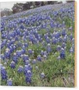 Bluebonnet Field Wood Print