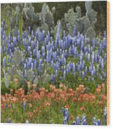 Bluebonnet Paintbrush And Prickly Pear Wood Print