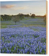Bluebonnet Sunrise And A Windmill In Texas 1 Wood Print