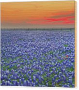 Bluebonnet Sunset Vista - Texas Landscape Wood Print by Jon Holiday