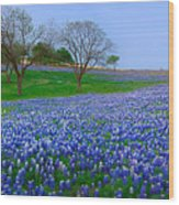 Bluebonnet Vista - Texas Bluebonnet Wildflowers Landscape Flowers  Wood Print