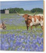 Bluebonnets And Longhorns 4 Wood Print