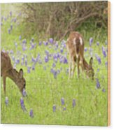 Bluebonnets And Whitetails Wood Print