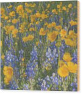 Bluebonnets And Wildflowers Wood Print