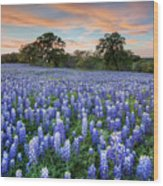 Bluebonnets On A Spring Evening 403-1 Wood Print