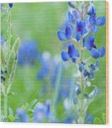 Bluebonnets Wood Print