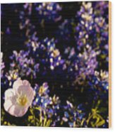 Bluebonnets With Buttercup Wood Print