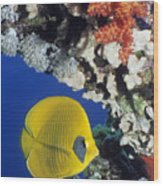 Bluecheek Butterflyfish Wood Print by Georgette Douwma