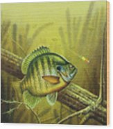 Bluegill And Jig Wood Print