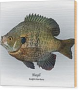 Bluegill Wood Print by Ralph Martens