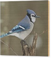 Bluejay 012 Wood Print
